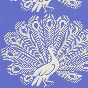 Peacock (cornflower blue)
