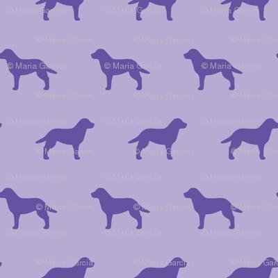 Labrador Retriever Violet