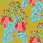marañón / cashew tree_1