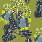 marañón / cashew tree_2