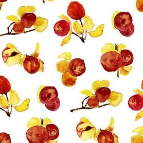 bittersweet berries watercolor on white