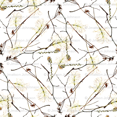 twigs and  dried flowers on white