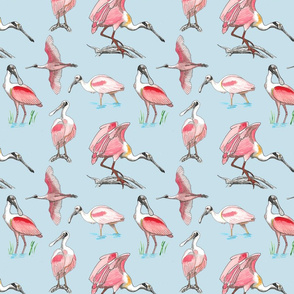 Roseate spoonbills on blue 8x8