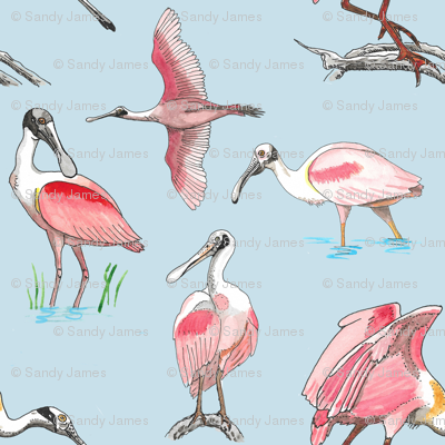 Roseate spoonbills on blue 10x10