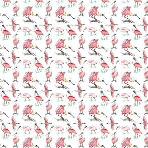 Roseate spoonbills on white 4x4