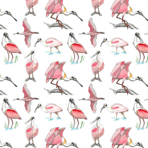 Roseate spoonbills on white 8x8