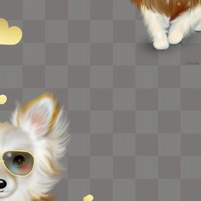 Autumm Chihuahua grey XL