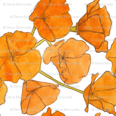 California Poppy Pattern (Small)