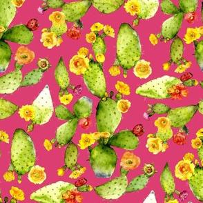 flowering watercolor cacti  on pink fushia