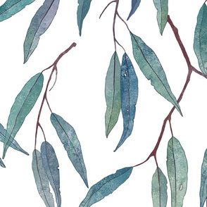 Eucalyptus leaves /scale/