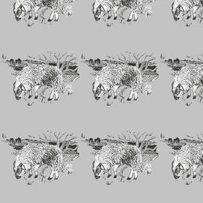 dartmoor sheep  grey