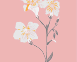 Floral-illustration-pink_thumb