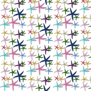 starfish tropics  - 525 MEDIUM