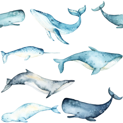 Watercolor Whales // White