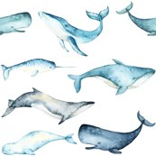 Rwatercolor_whales_shop_thumb