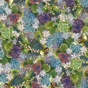 succulent tapestry