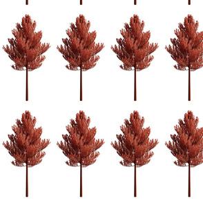Arvores de outono