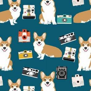 corgi camera dog breed welsh corgis pet fabric teal