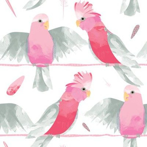 Galahs by Mount Vic and Me