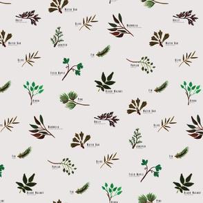 North American Plants