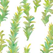 Kelp - Large