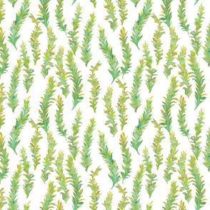 Kelp - small