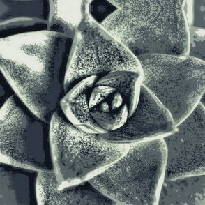 Gray Succulents