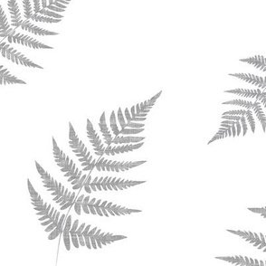 Gray Texture Fern