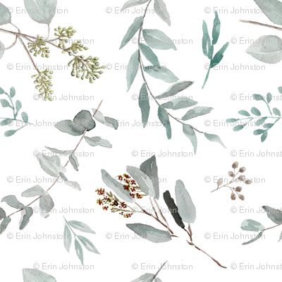 Eucalyptus Leaves Edition 2 || Australian Natives Trees