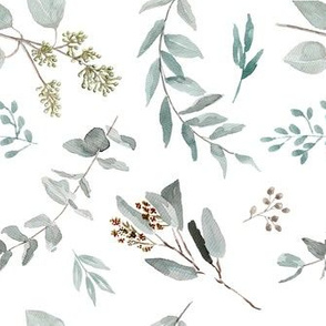 Eucalyptus Leaves Edition 2 || Australian Natives Trees