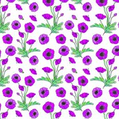 Purple-poppy-repeat_shop_thumb