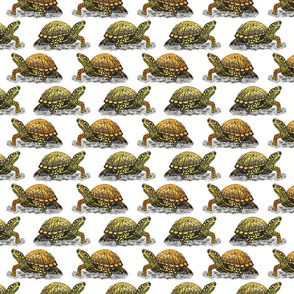 box turtle 4x4