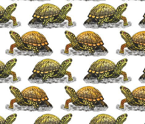 Box-turtle_shop_preview