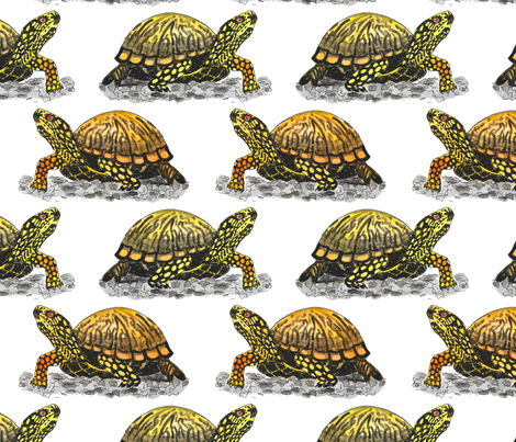 box turtle fabric by leroyj on Spoonflower - custom fabric