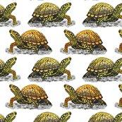 Box-turtle_shop_thumb