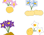 Rrrtaters_n_flowers_thumb