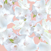 White Gladiolus Flower Pattern