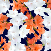 Peach and white Gladiolus Pattern