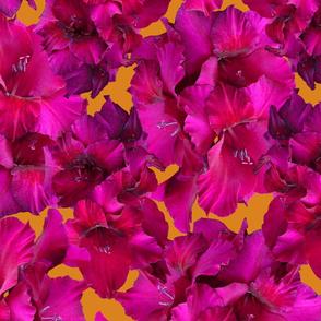 Magenta Gladiolus Flower Pattern