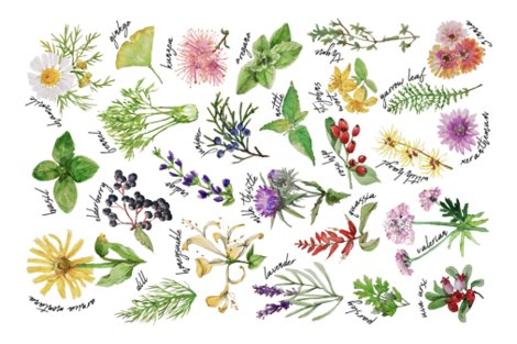 Rplants_and_herbs_alphabet_tea_towel_less_saturated_shop_preview