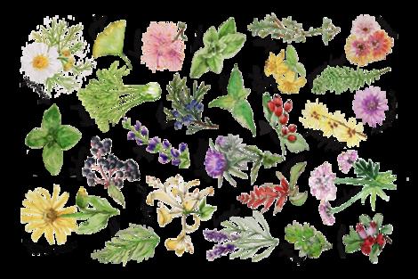 Plants and Herbs Alphabet tea towel fabric by thekindredpines on Spoonflower - custom fabric