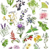 Rrplants-and-herbs-alphabet-pattern_shop_thumb