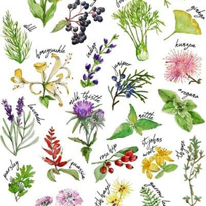 Plants and Herbs Alphabet (small)