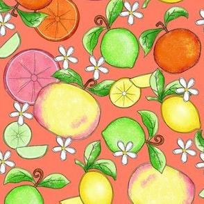Citrus Fruit Orange Large