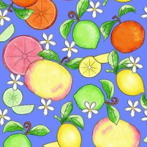 Citrus Fruit Periwinkle Large