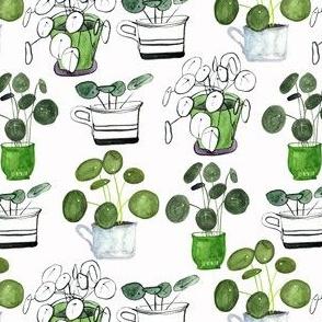 pilia love - plant love