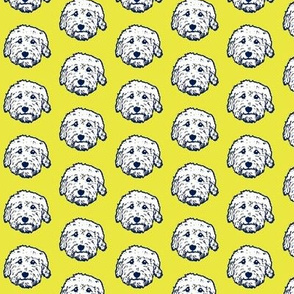 Mini Goldendoodle dogs on sunny yellow background