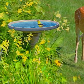 Twin deer and Finch