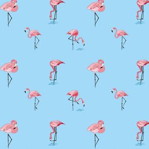 flamingi na niebieskim tle