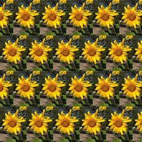 Sunflowers Re Joyce